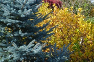 fall color doesn�t grow on trees� garden in the burrow
