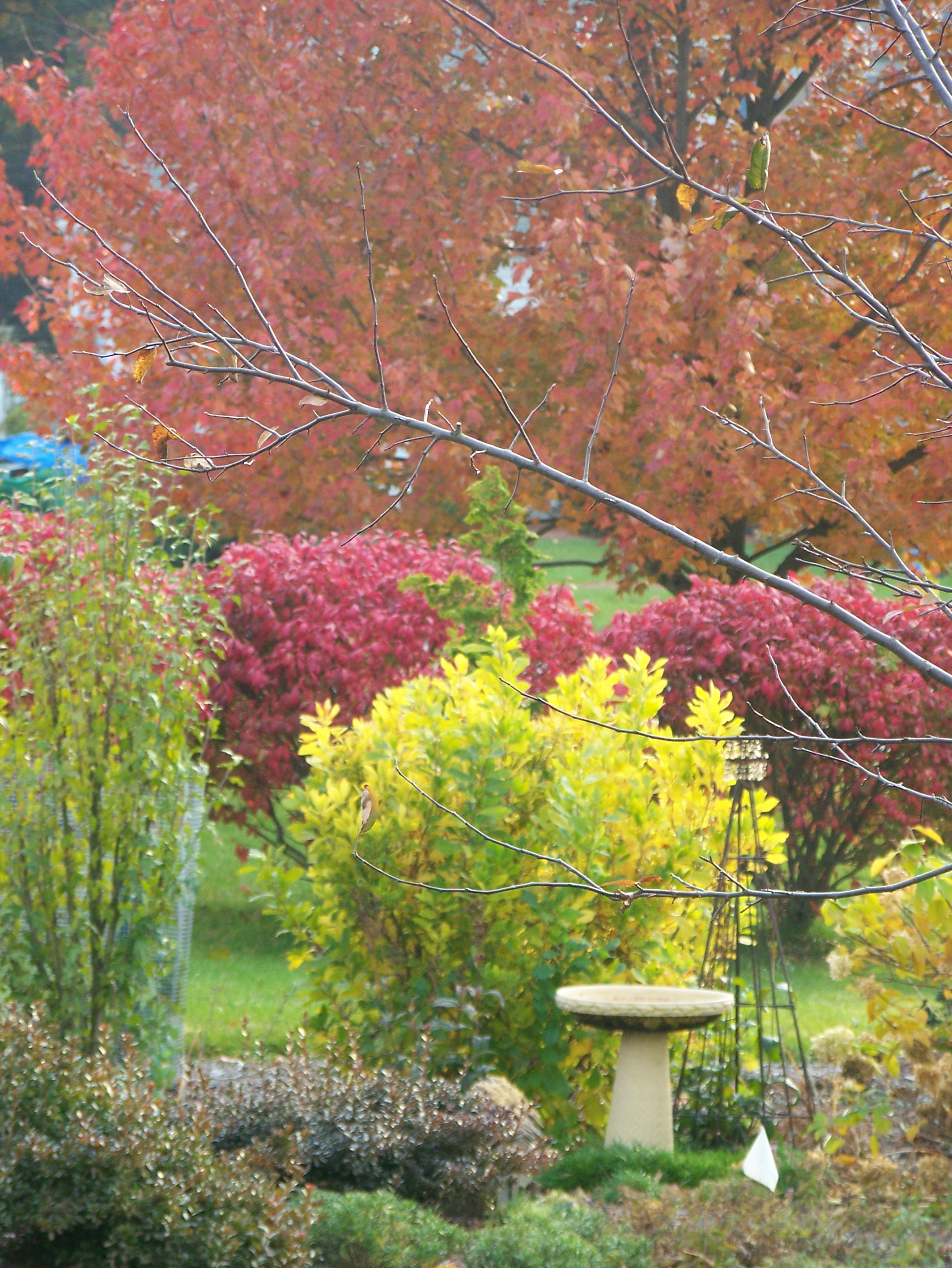 Fall color doesn\'t grow on trees…. | Garden In The Burrow
